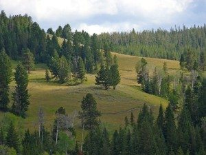 Uplands Trail