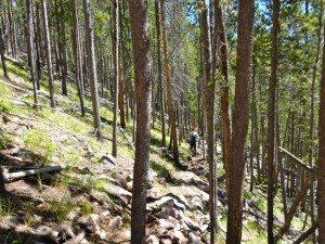 Walk Off Climber's Trail