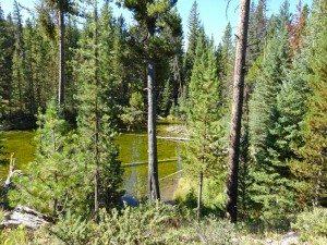 hidden Pond Hummocks