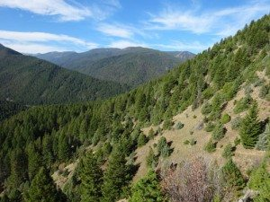 The Trail Switchbacks Between Meadow and forests