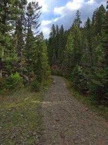 rat lake main trail