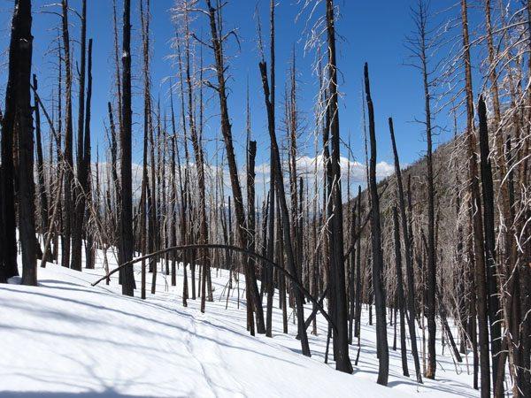 Black Mountain, Absaroka-Beartooth WIlderness