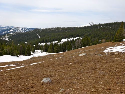 Beehive Meadows in May