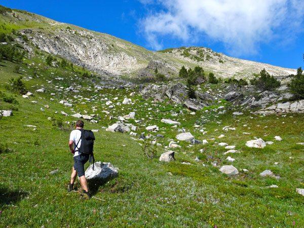 alpine meadows montana