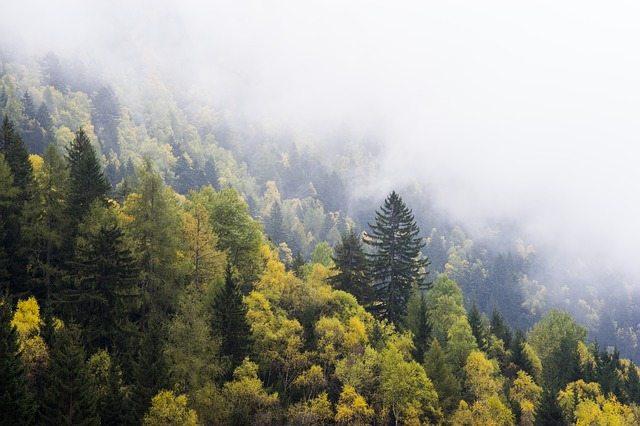 Forest   Stock Image   Pixabay