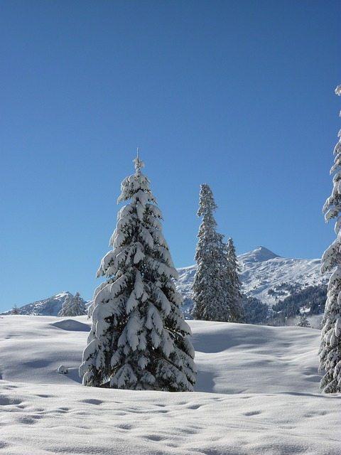 Snowy Trees Tree well - pixabay