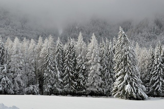 Snowy Trees in Winter - Pixabay
