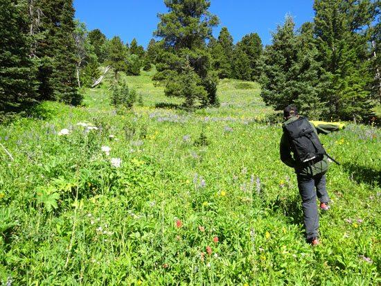 J. Wood Skipping Through The Montana Wildflowers