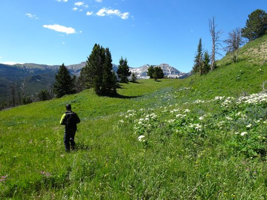 Stunning Views and Great WIldflower Studded Meadows