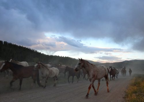 Horses On The Taylor Fork Road