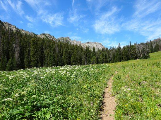 Sentinel Creek Trail