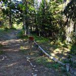 Cedar Loop Trail Splits with Trail 321