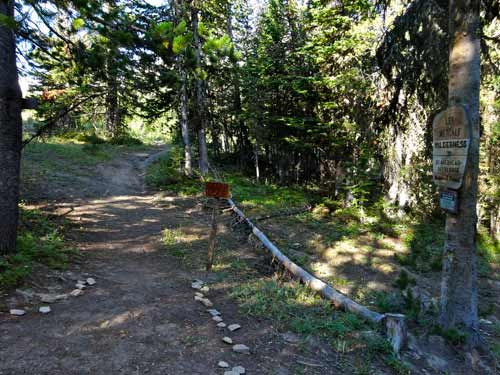 Cedar Loop Trail Splits with Trail 321