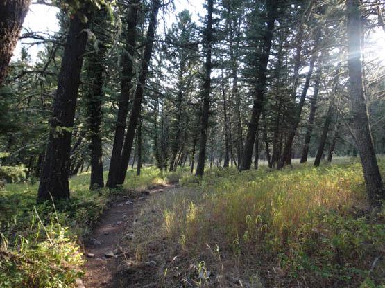 Indian Creek Trail Montana