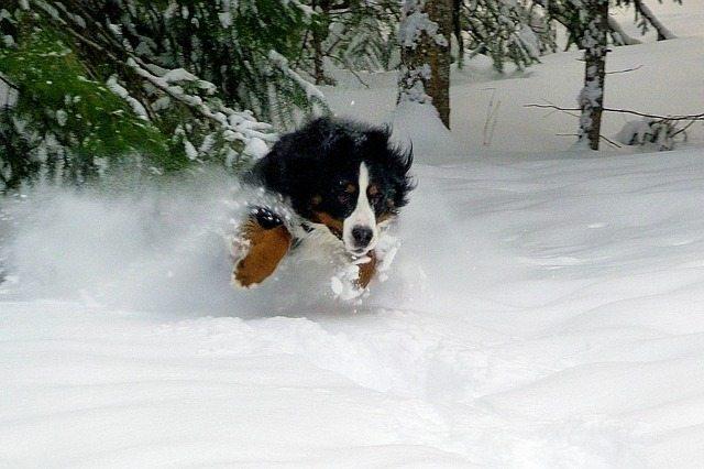 Dog Powder Day | Pixabay Image