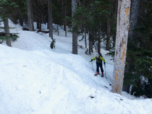 Skinning Through The North Cascade Forests