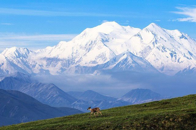Caribou In Front Of Denali | Pixabay Image